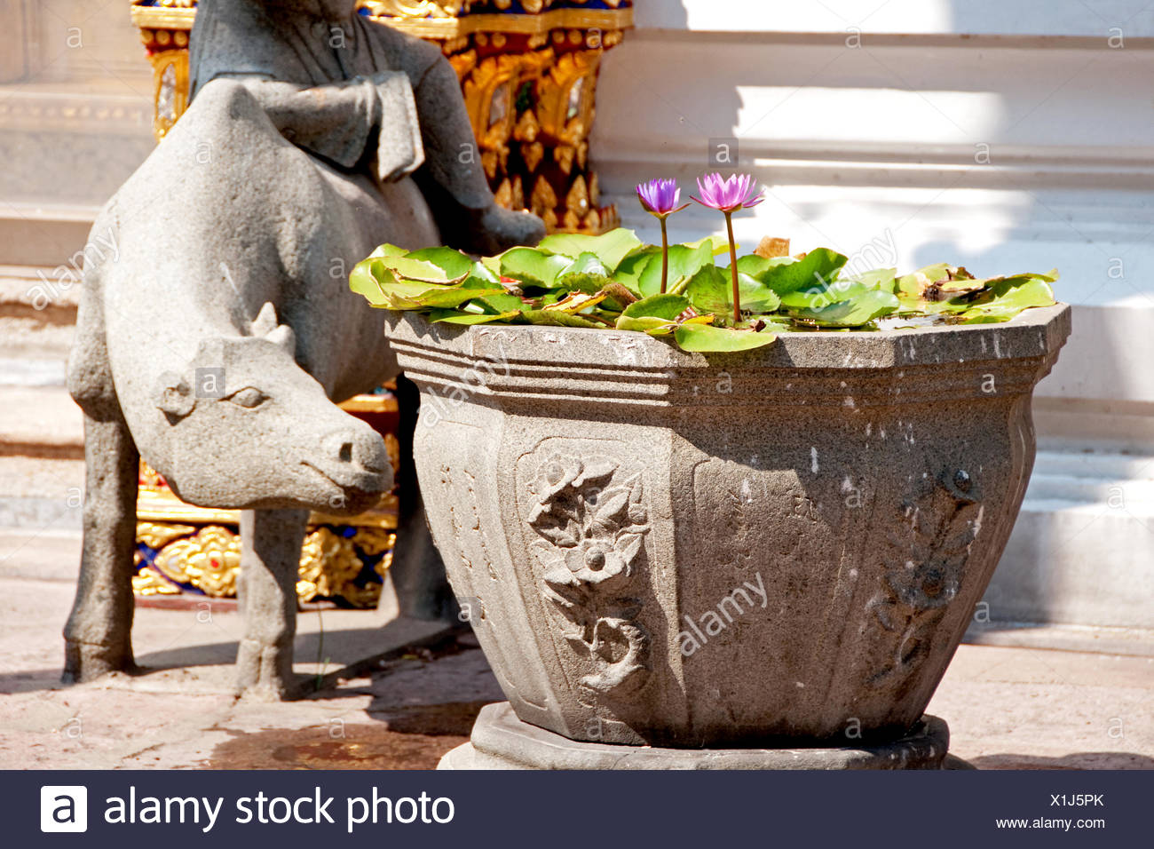 water lilies in stone urn - Stock Image