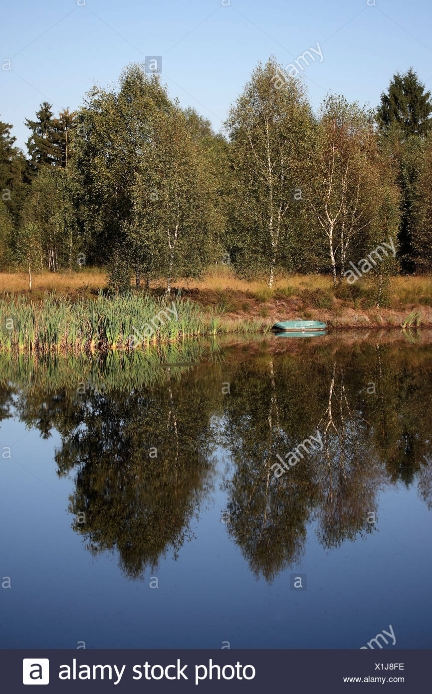 Reed landscape with pond in Upper Swabia, Baden-Wuerttemberg, Germany, Europe Stock Photo