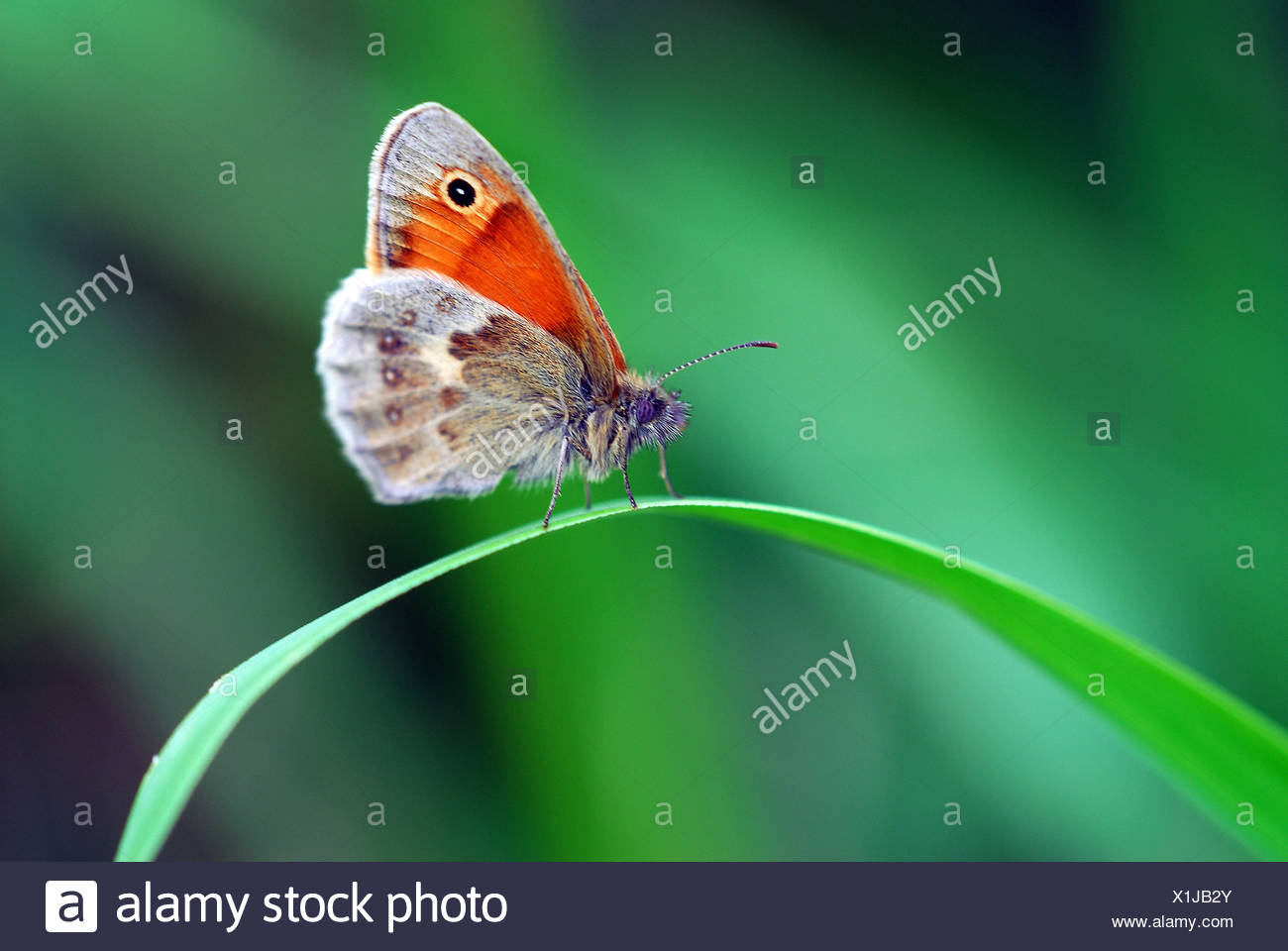finger animal insect - Stock Image