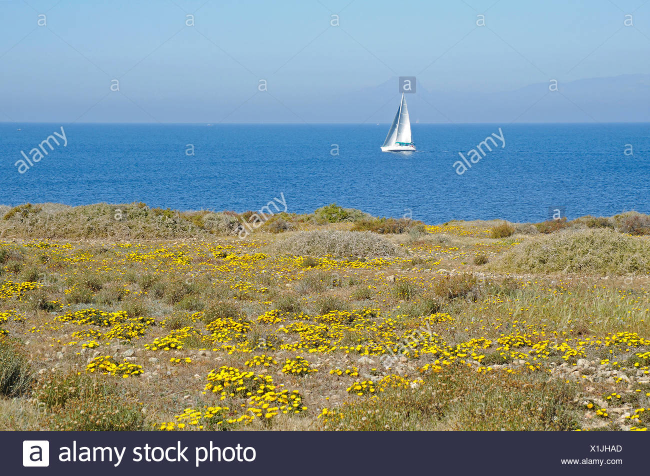 Single sail boat, coast, sea, Tabarca, Isla de Tabarca, Alicante, Costa Blanca, Spain, Europe - Stock Image
