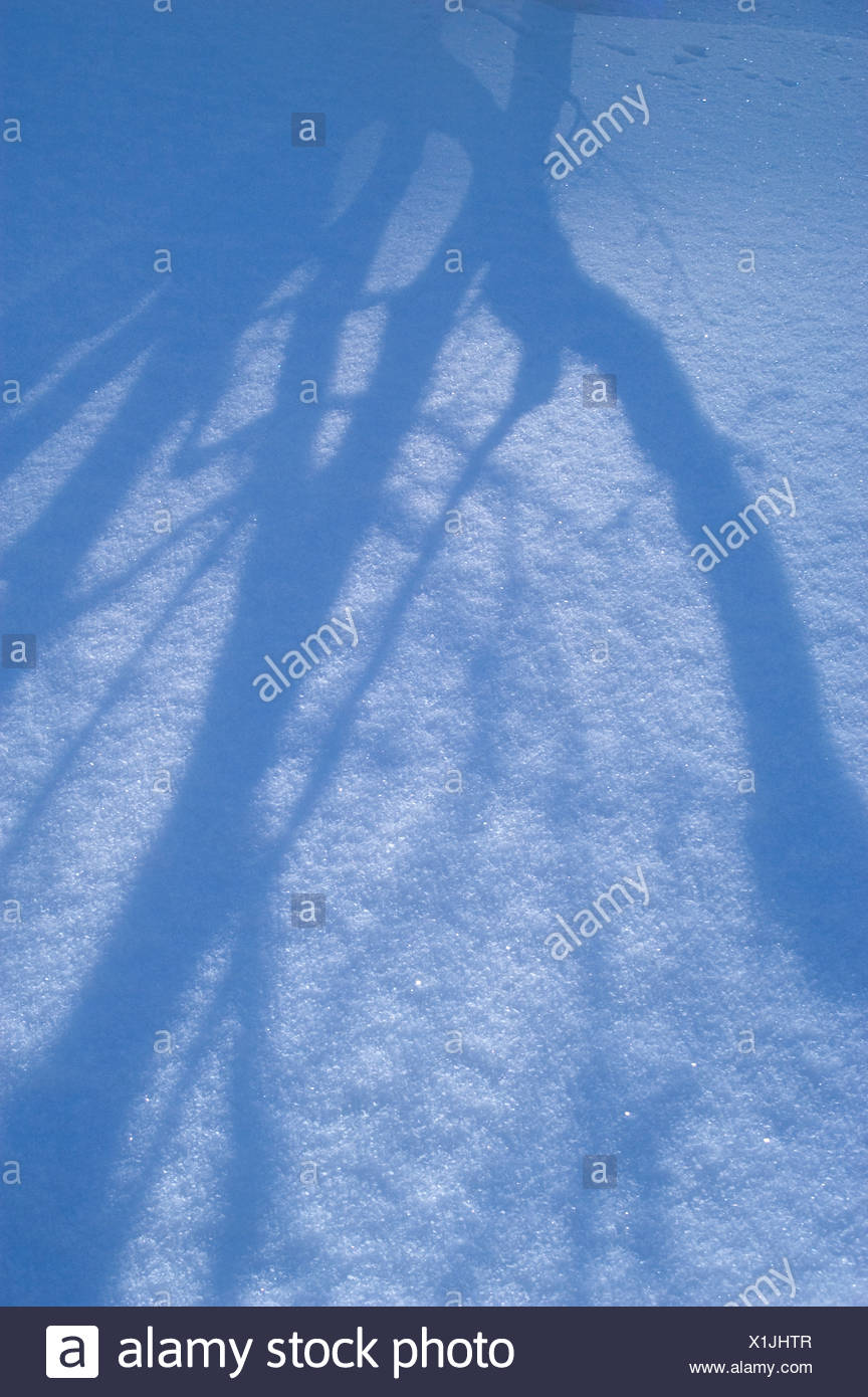Shaddow of a tree on the snow - Stock Image