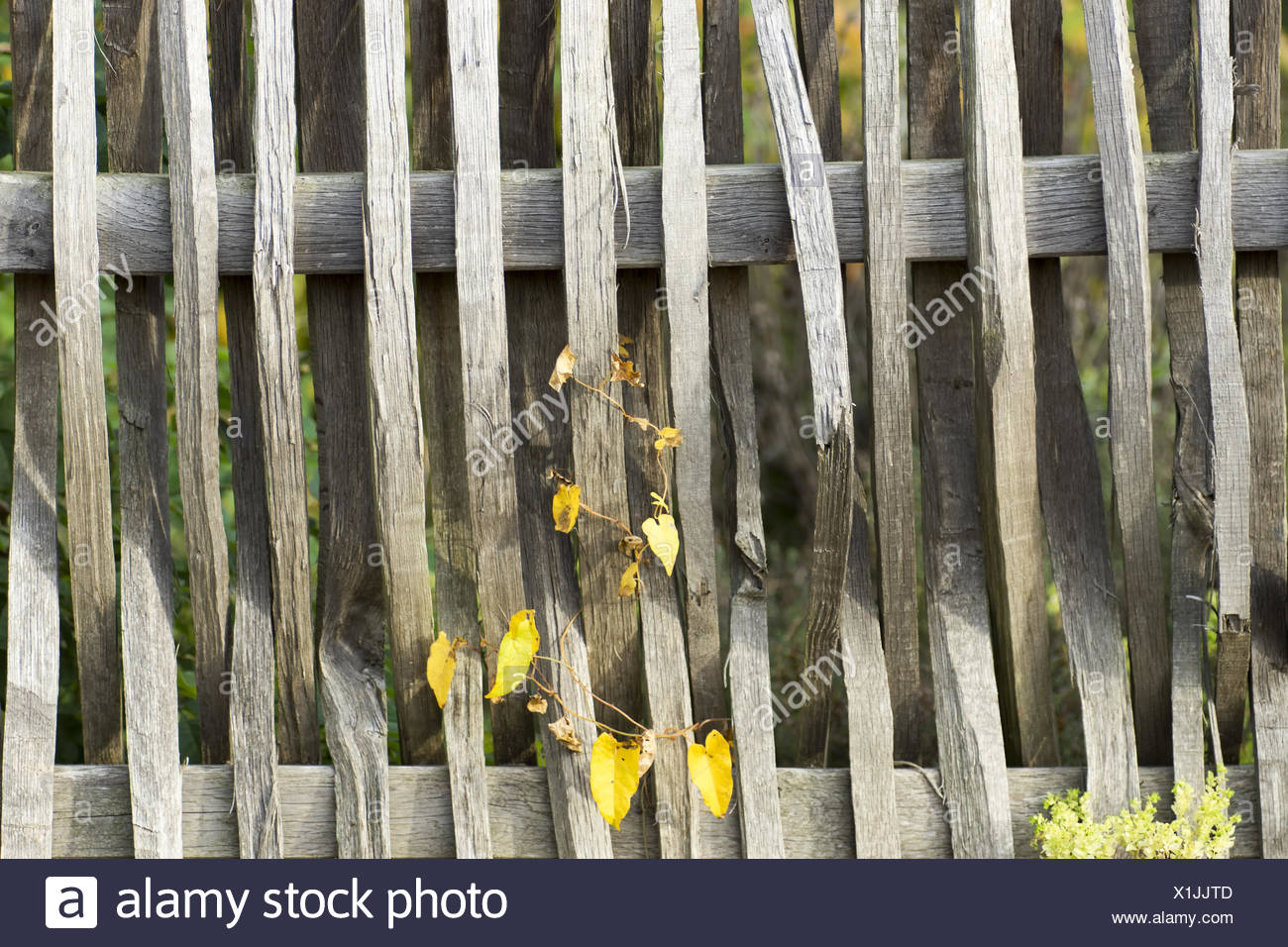 Braides batten fence Stock Photo