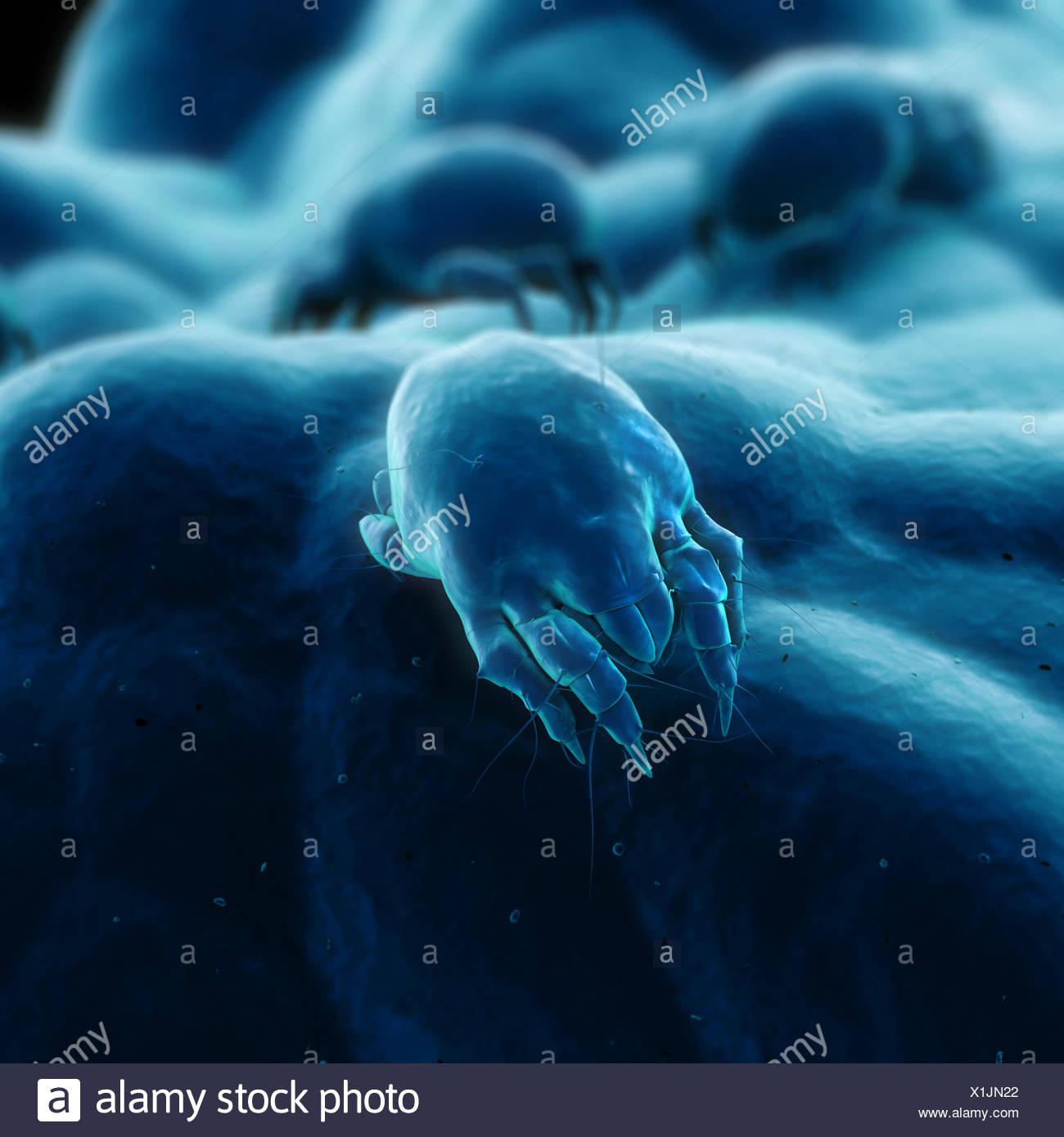 dust dusty hygiene - Stock Image