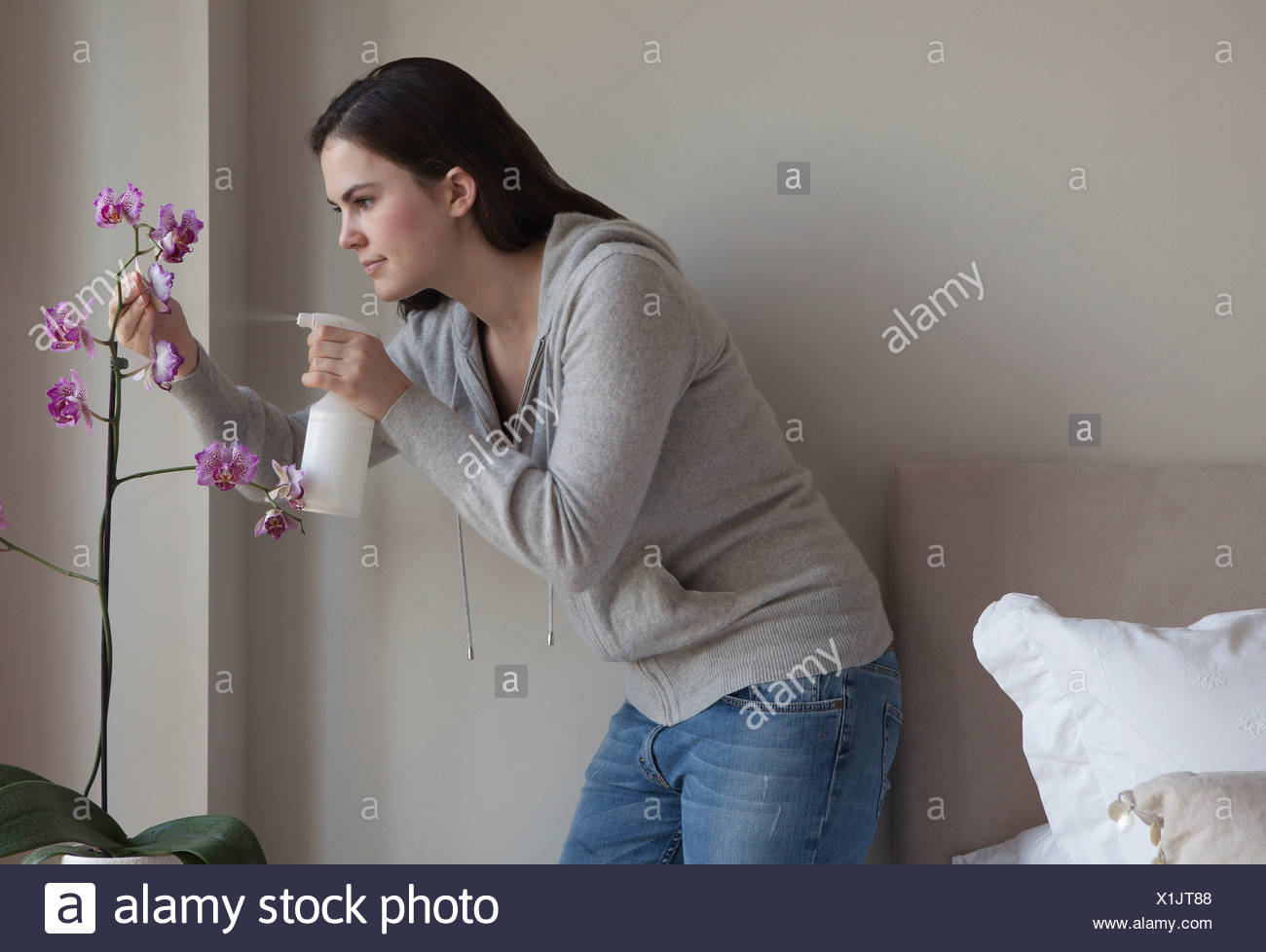 Woman spraying indoor plant - Stock Image