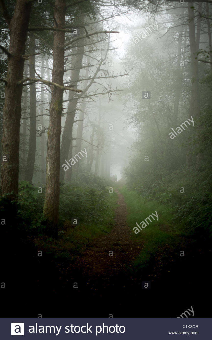 Hikers on Spain's Camino Primitivo, one of the routes of the Camino de Santiago, make their way through a foggy forest. - Stock Image