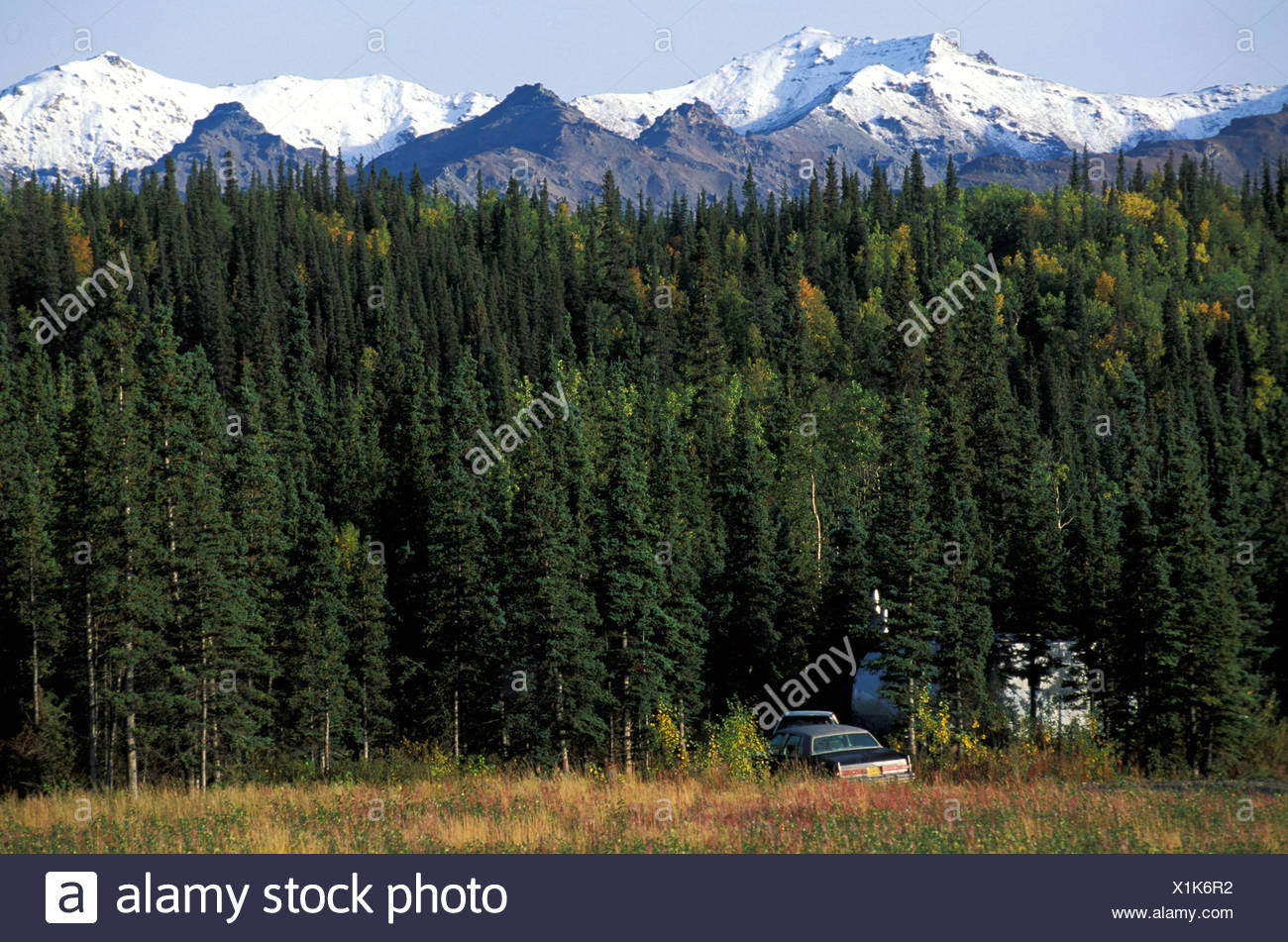 Healy, Alaska, USA, lush forest, mountain, sunny, autumn, colors, camping, camp, forest, grove - Stock Image