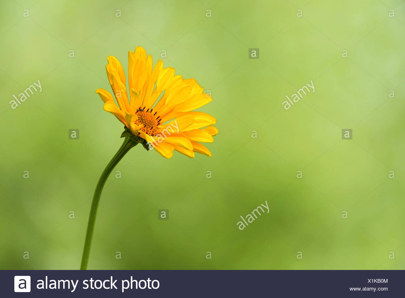 blooming composite - Stock Image