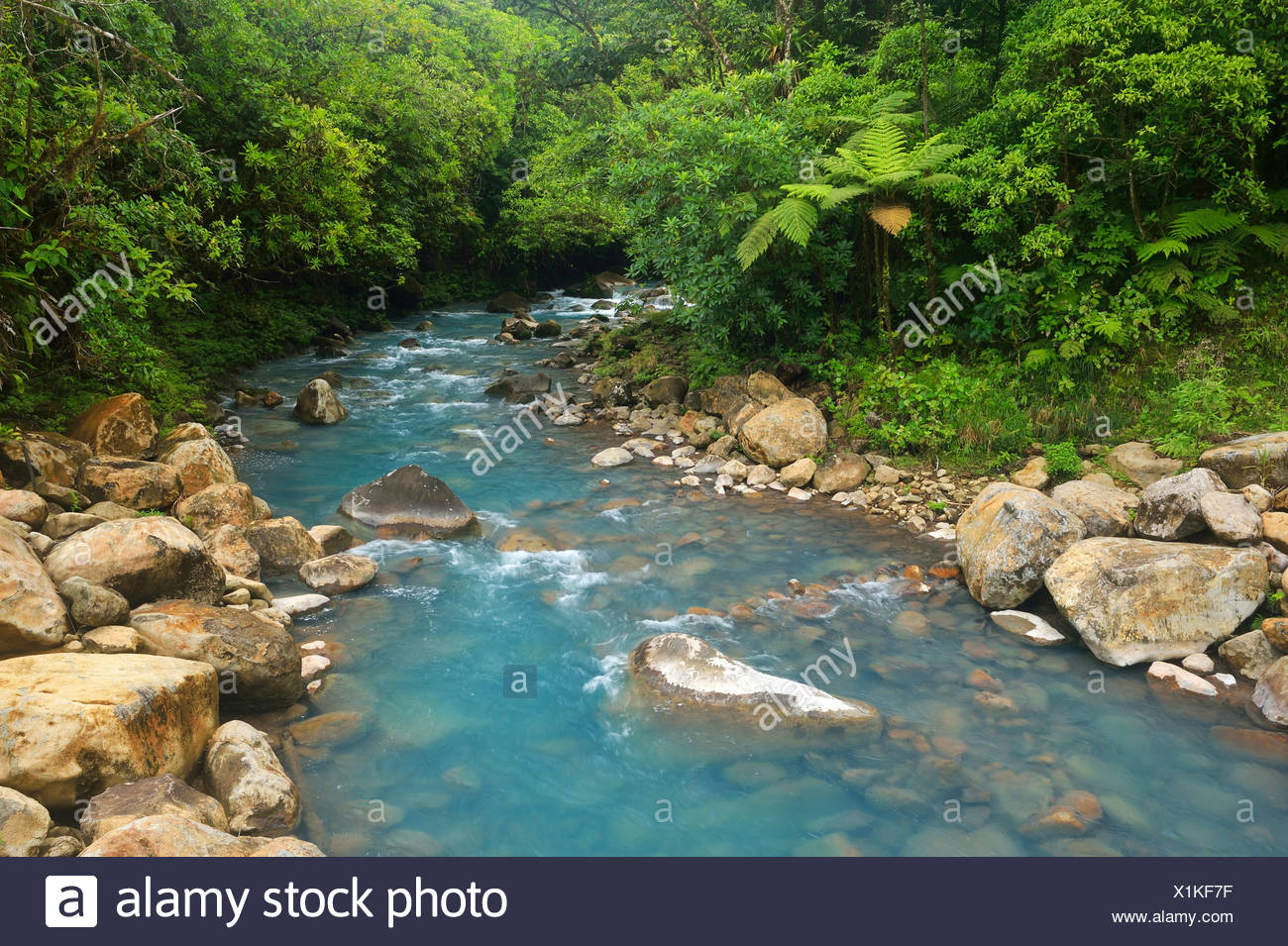 River Rio Celeste, coloured light blue by minerals, Tenorio Volcano National Park, Costa Rica, Central America - Stock Image