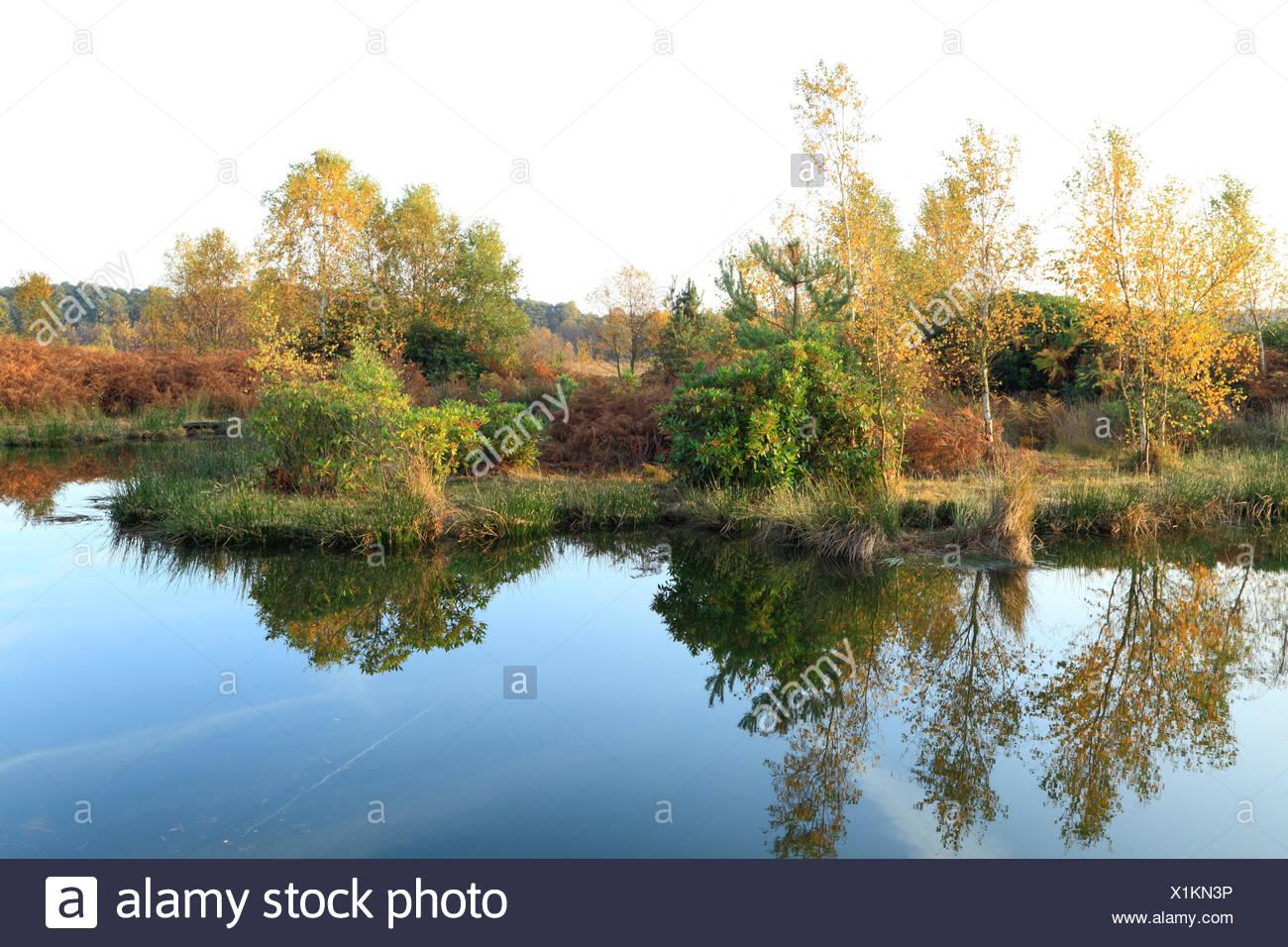 Dersingham Bog National Nature Reserve, designated a Site of Special Scientific Interest, mire, heath and woodland, SSI, Autumn - Stock Image