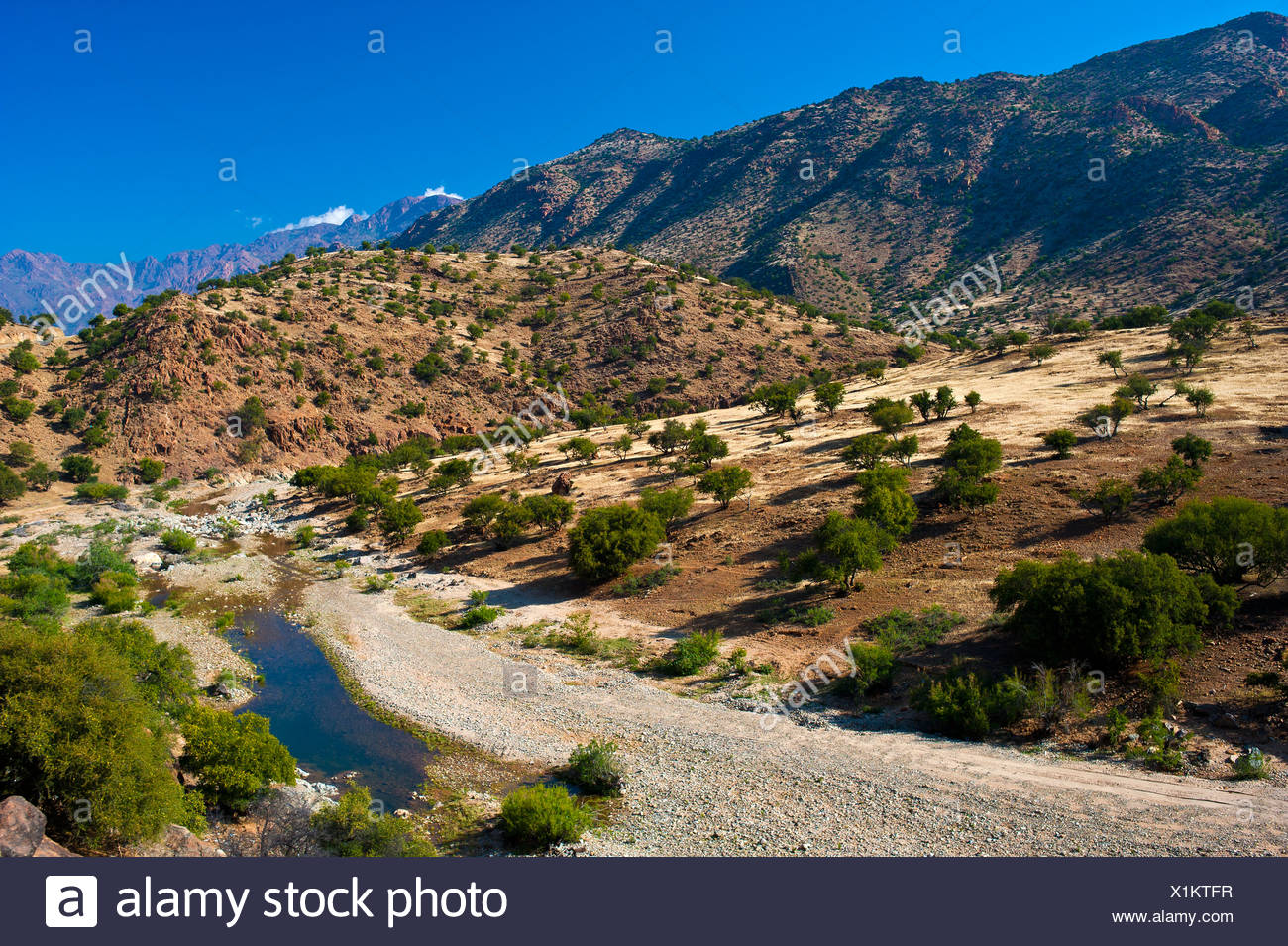 Typical mountain landscape with a river bed and Argan Trees (Argania spinosa), Anti-Atlas Mountains, Valley of the Ammeln Stock Photo