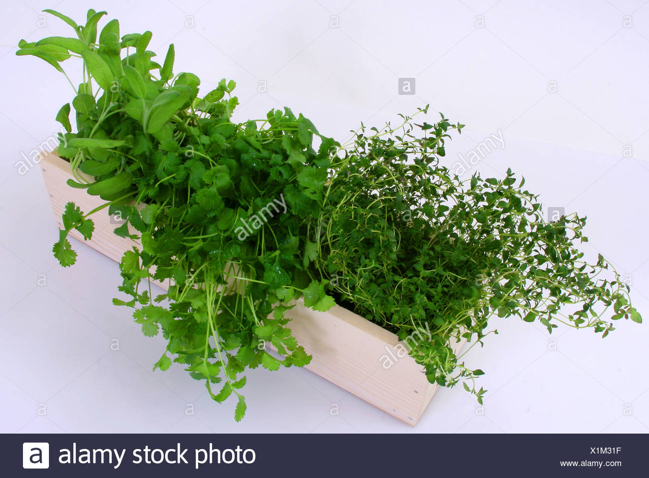 A window box filled with a thyme, parsley and sage plants - Stock Image
