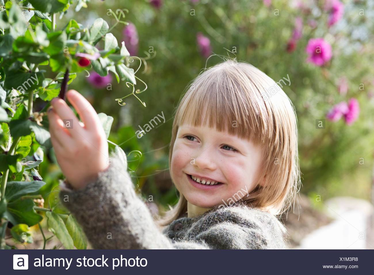 Portrait of boy tending bush in organic garden - Stock Image