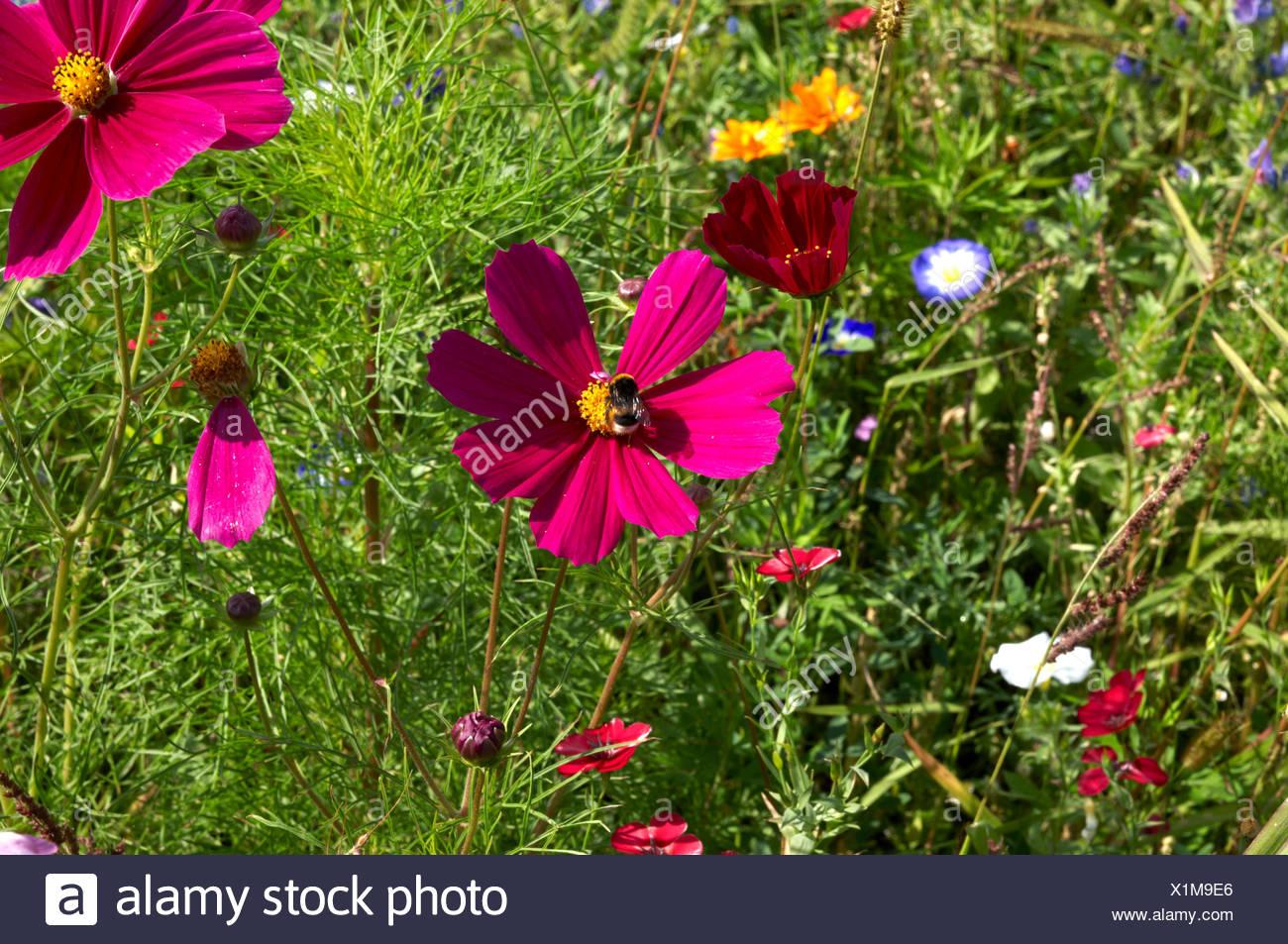summer flower meadow Stock Photo