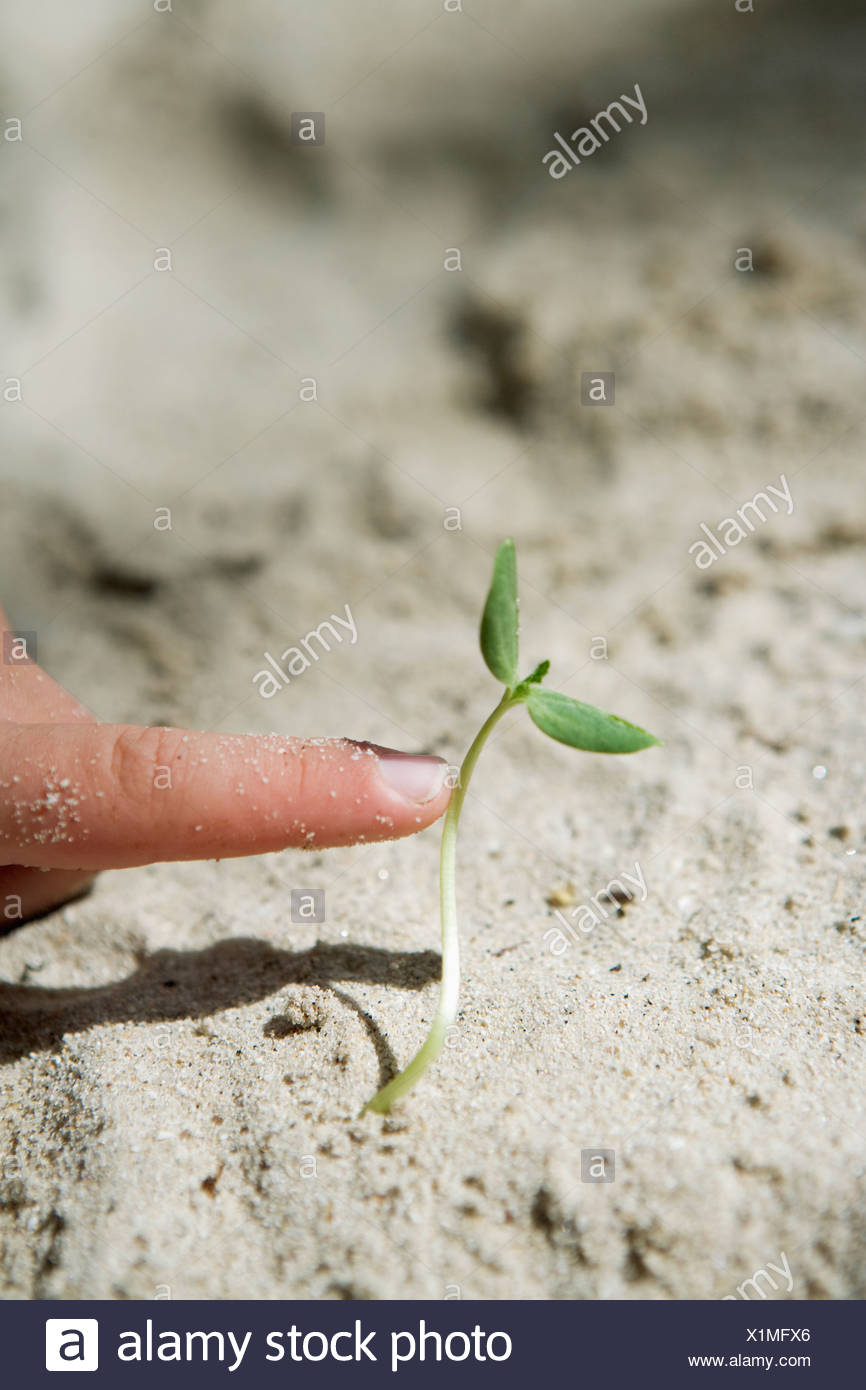 A finger pointing at a shoot. - Stock Image