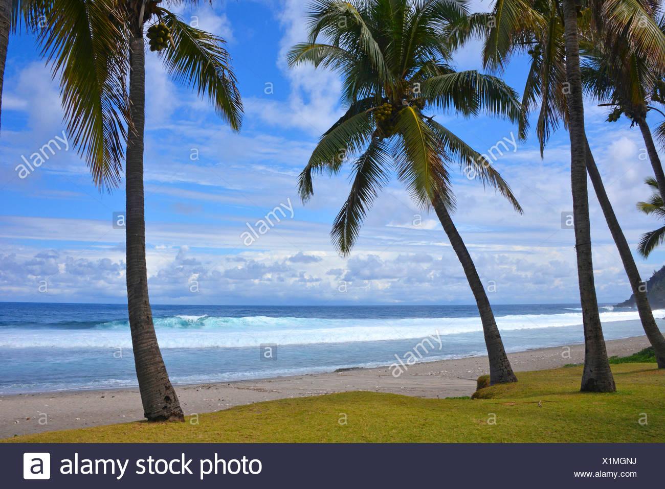 palm beach, Reunion - Stock Image