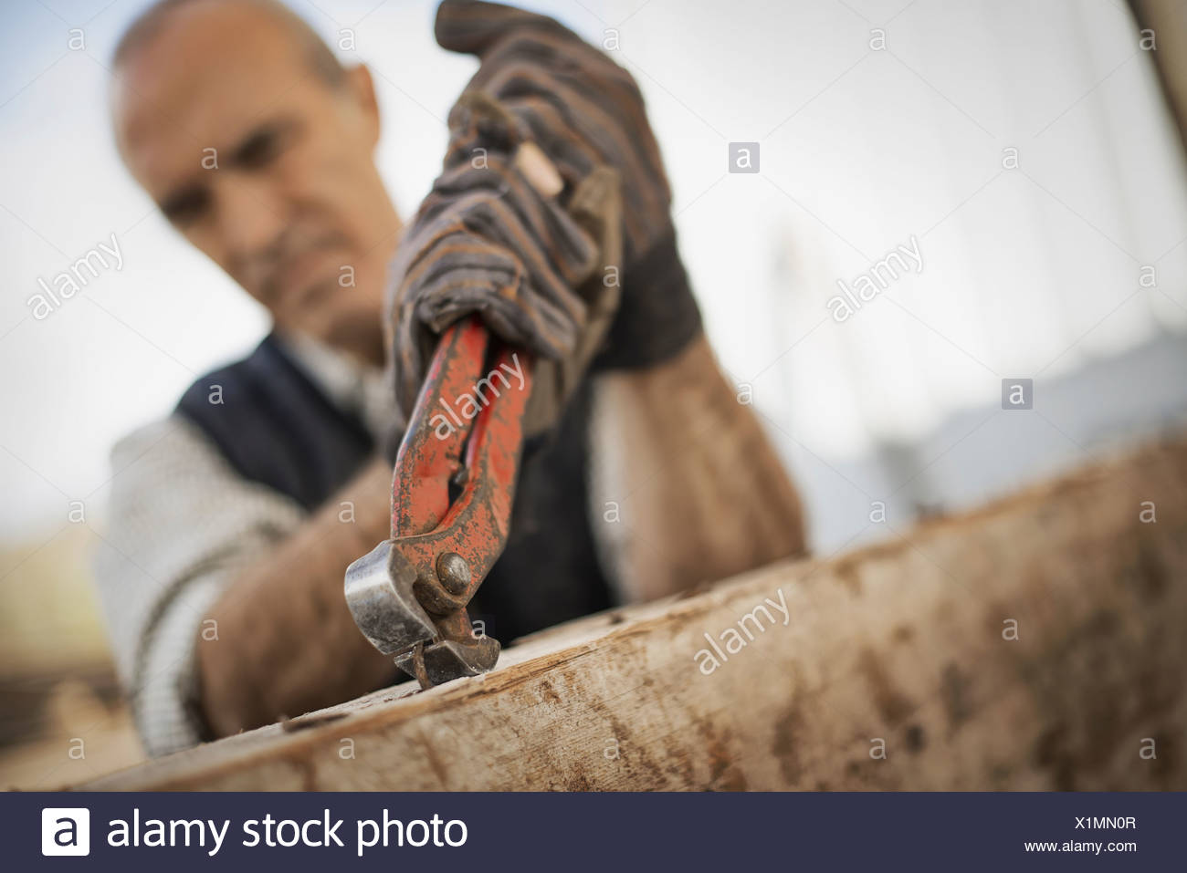 A man working in a reclaimed timber yard Using a tool to remove metals from a reclaimed piece of timber Stock Photo