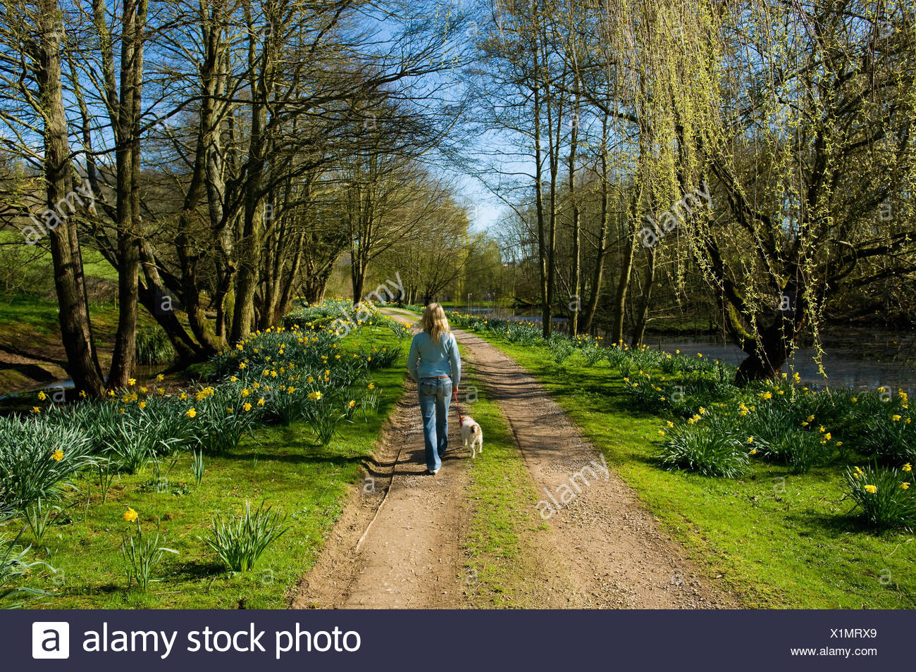 A woman and a small dog walking down a path through trees in fresh leaf. - Stock Image