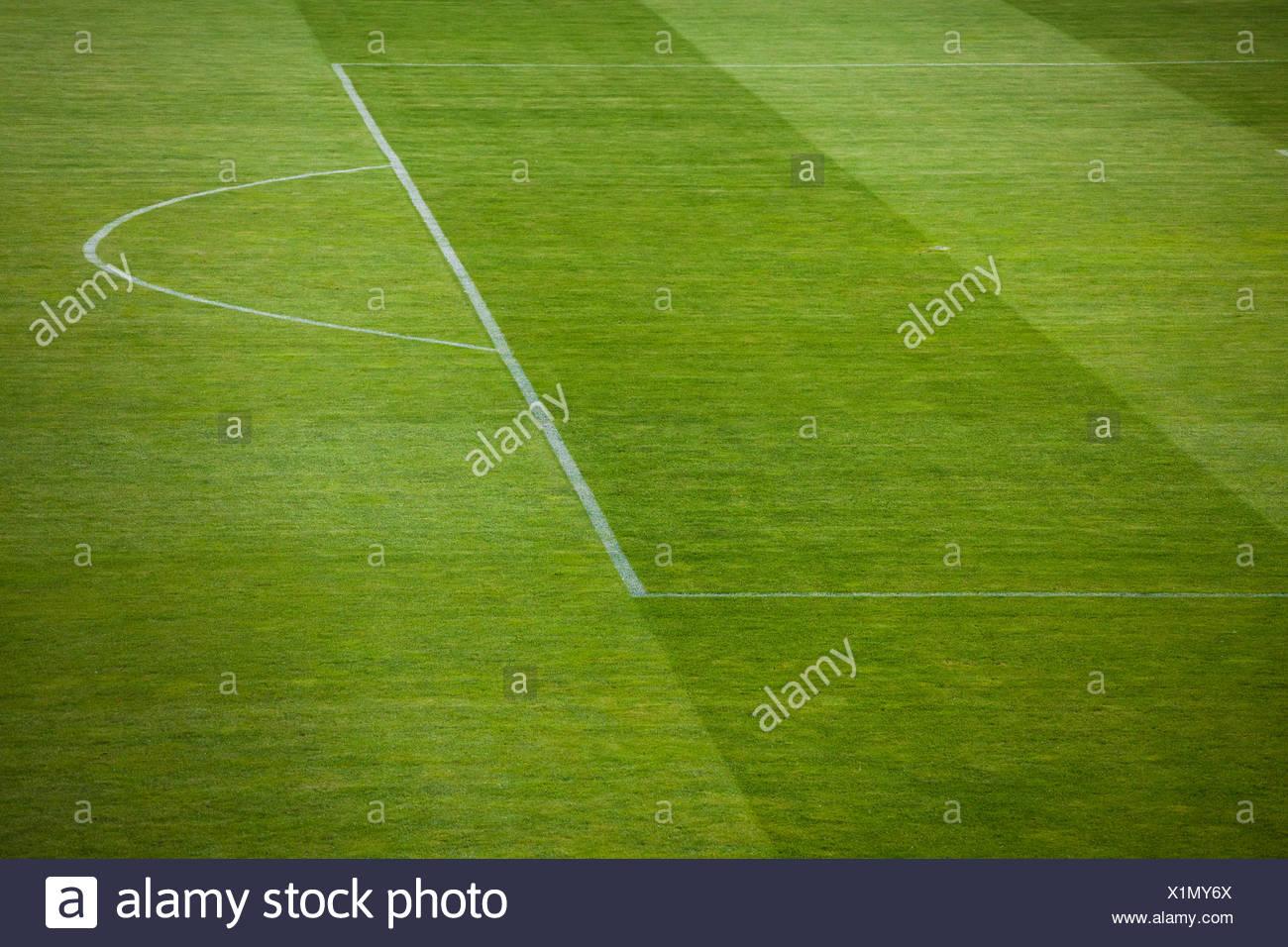 natural green grass soccer field21 green