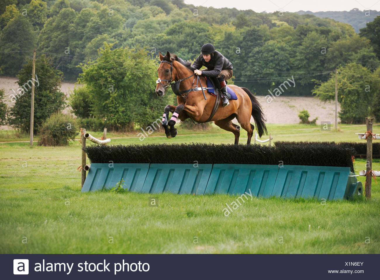 Man On A Bay Thoroughbred Horse Jumping A Brush Fence A Racing Hurdle On A Rural Point To Point Course Stock Photo Alamy