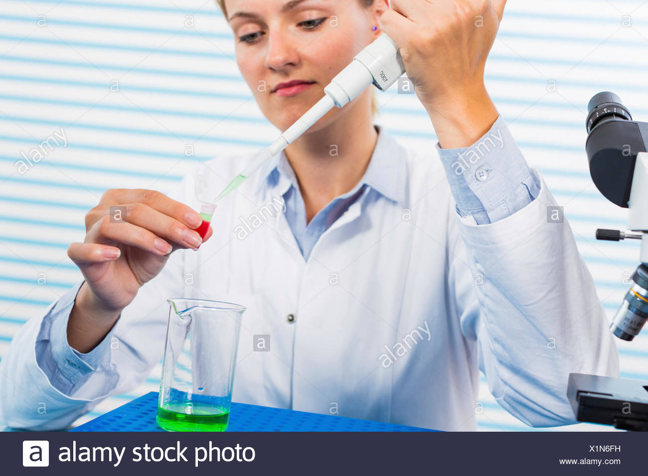 MODEL RELEASED. Female chemist using pipette in laboratory. - Stock Image