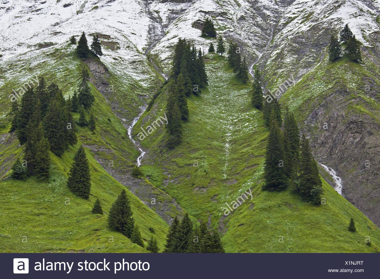 Austria, Vorarlberg, Hochtannberg Pass, spruces, snow, - Stock Image