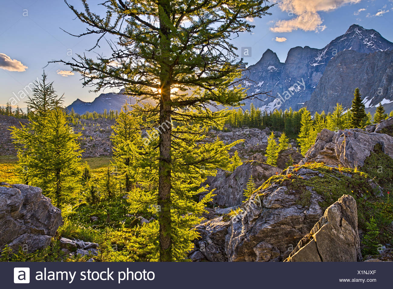 The view from Goodsir Pass over the larch forest near the boundary of Kootenay and Yoho National Parks. Kootenay National Park - Stock Image