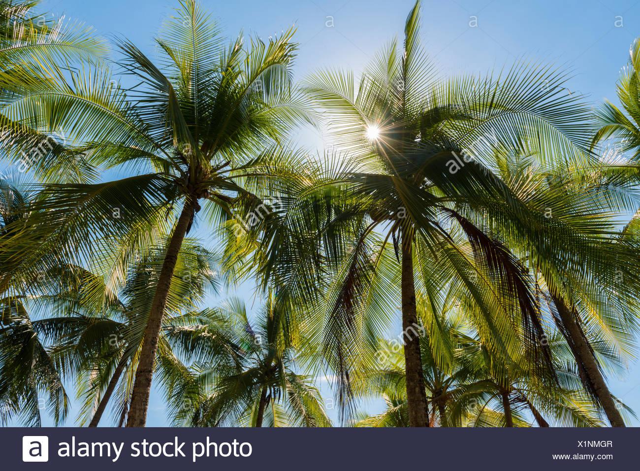 Sun shines through palm trees, Costa Rica, Central America - Stock Image