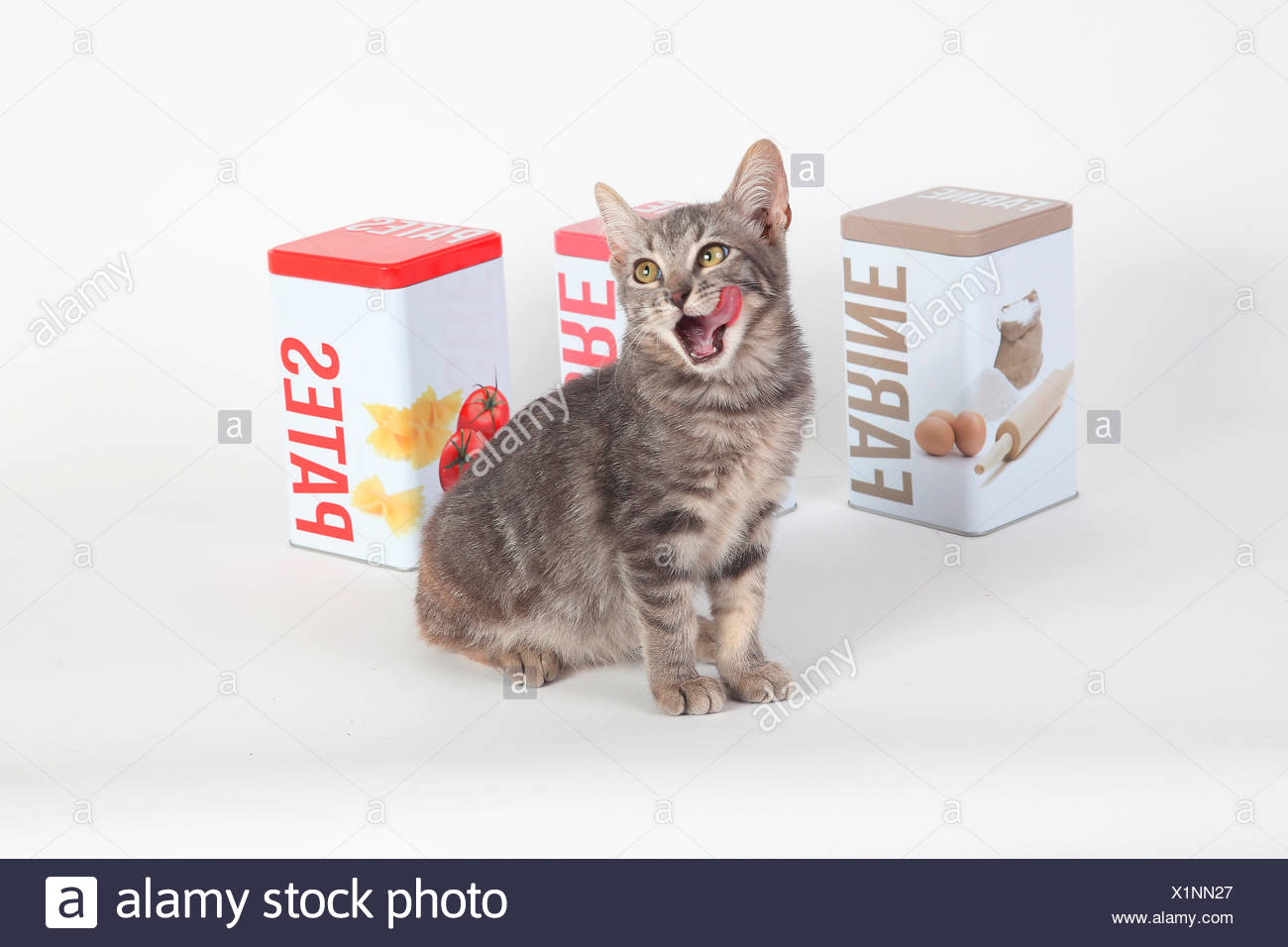 Kitten yawning in front of food boxes on white background - Stock Image