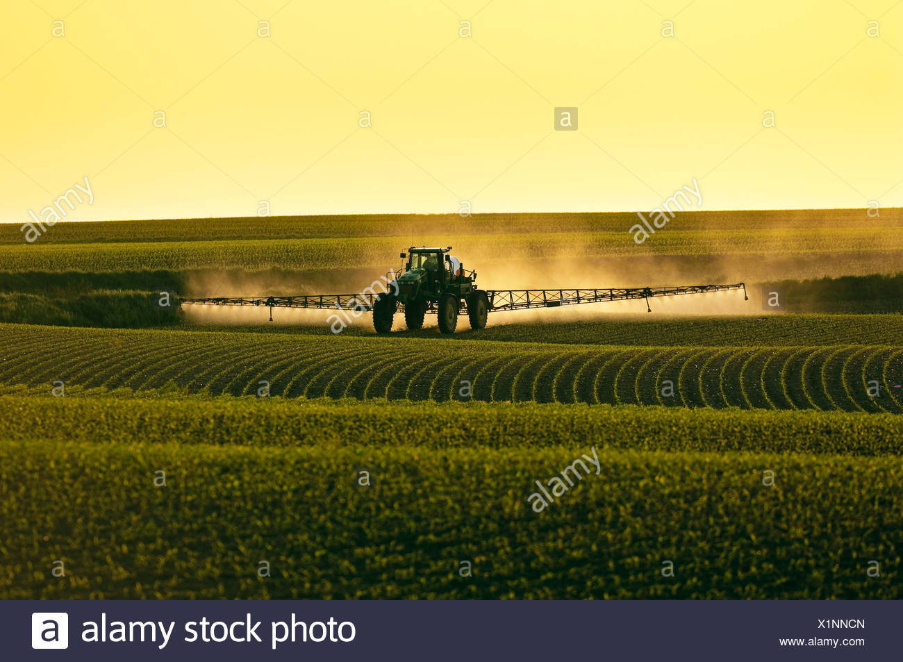 Post-emergent herbicide being applied to an early growth grain corn field by a John Deere sprayer in late afternoon light / Iowa - Stock Image