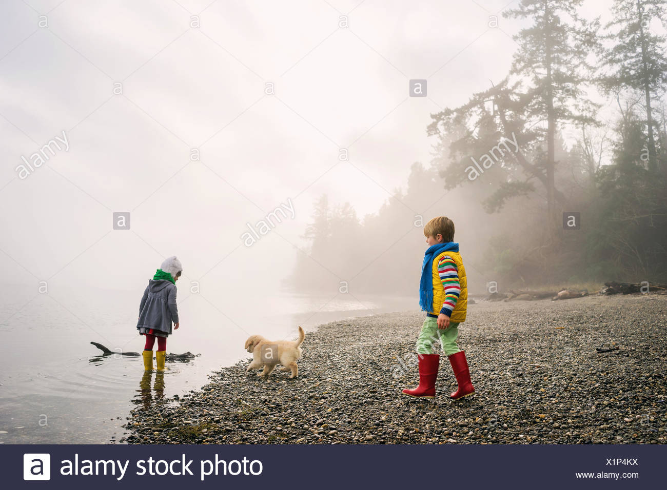 Boy and girl playing with golden retriever puppy dog on foggy beach Stock Photo