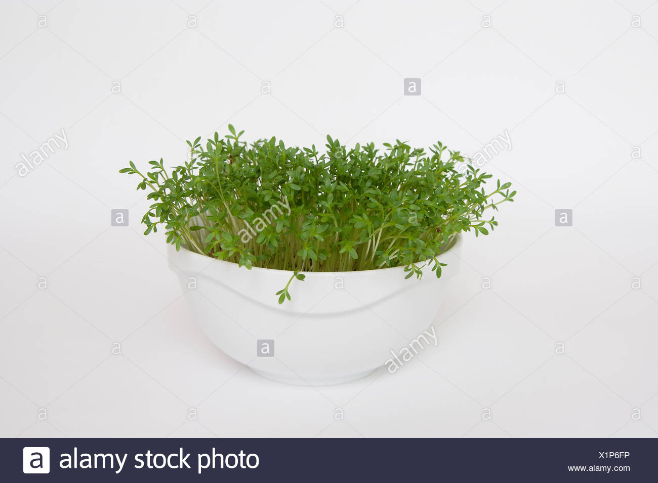 The Spice Gardens Stock Photos & The Spice Gardens Stock Images - Alamy