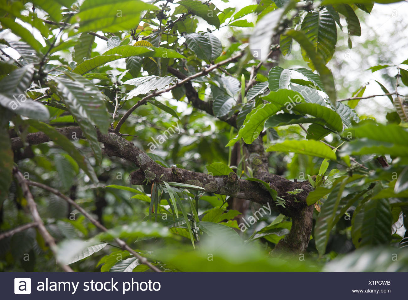 Close-Up Of Plants - Stock Image