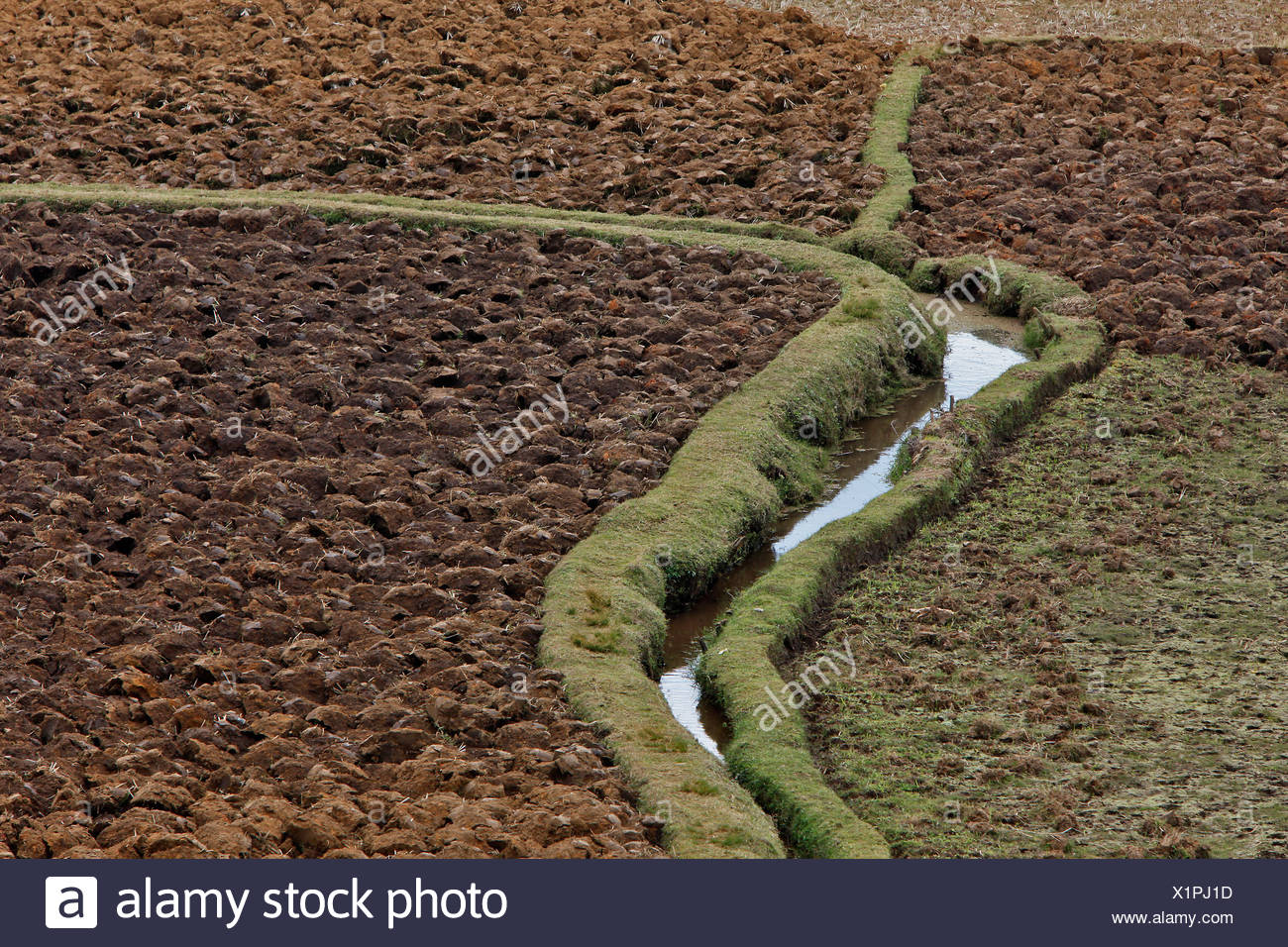 Rice paddy in the central highlands, Madagascar, Africa - Stock Image