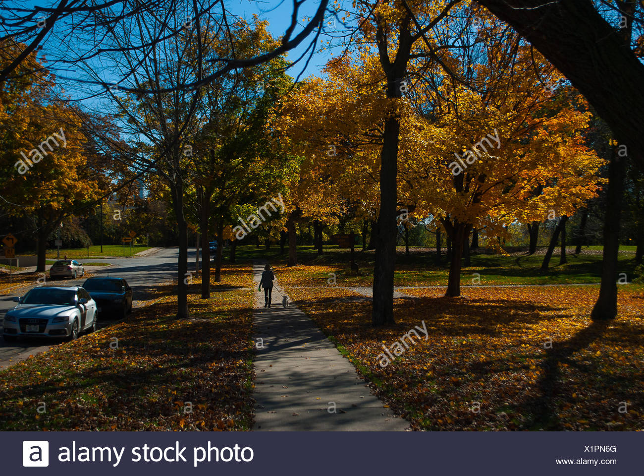 Rear View Of Woman Walking Dog In Park During Autumn - Stock Image