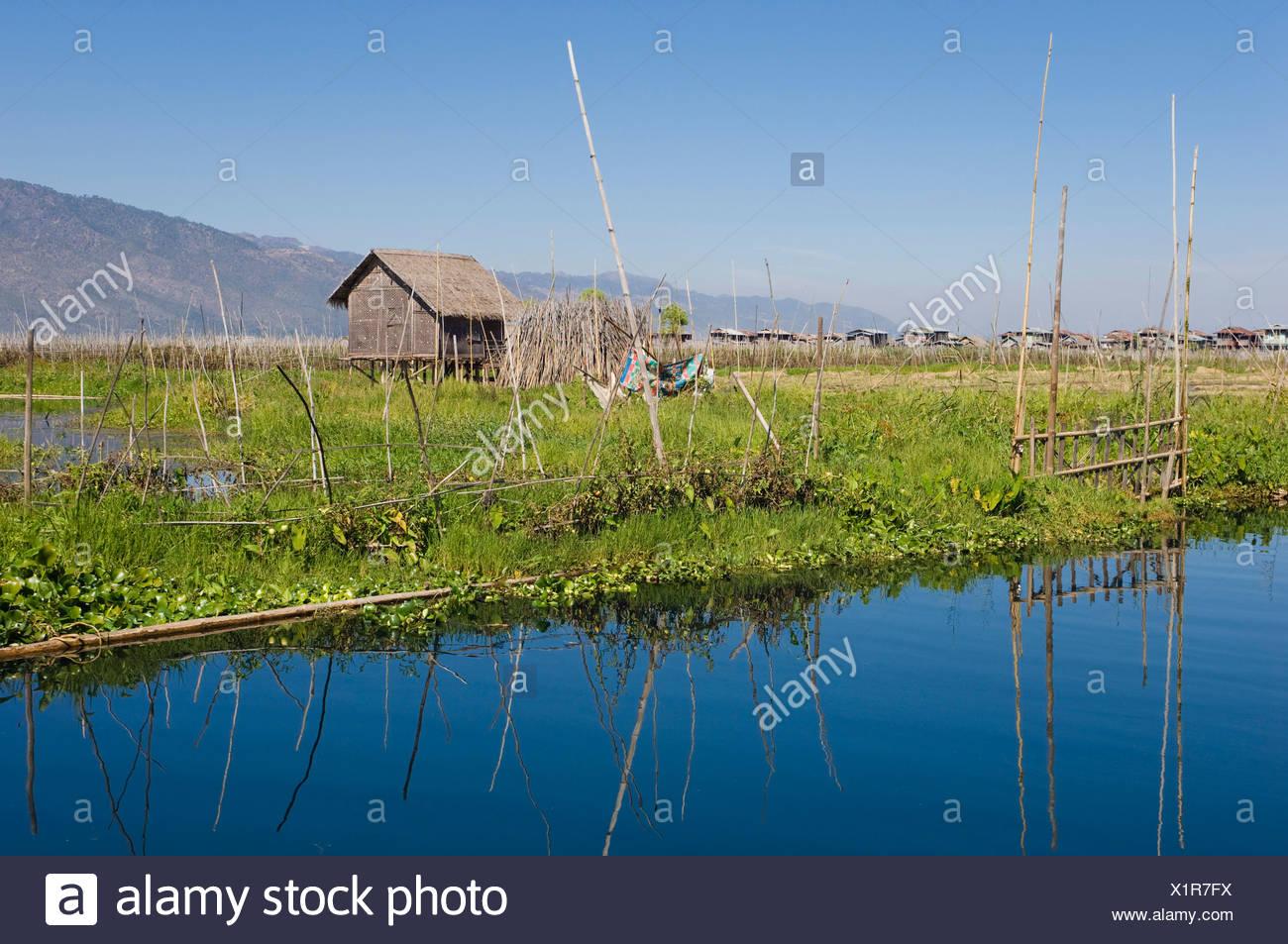 Floating Garden, Inle Lake, Shan State, Burma, Myanmar, Asia Stock Photo
