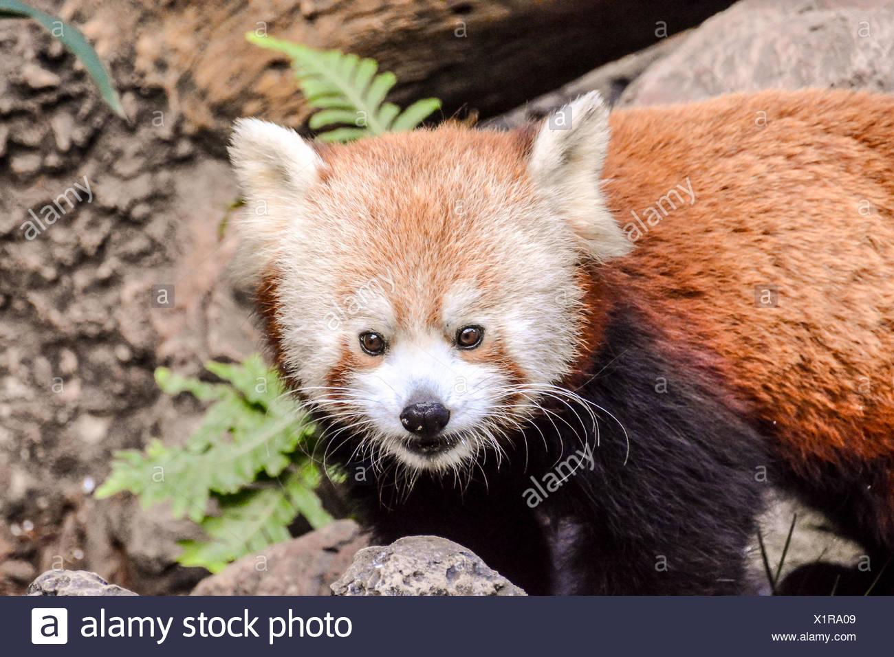 Firefox Stock Photos & Firefox Stock Images