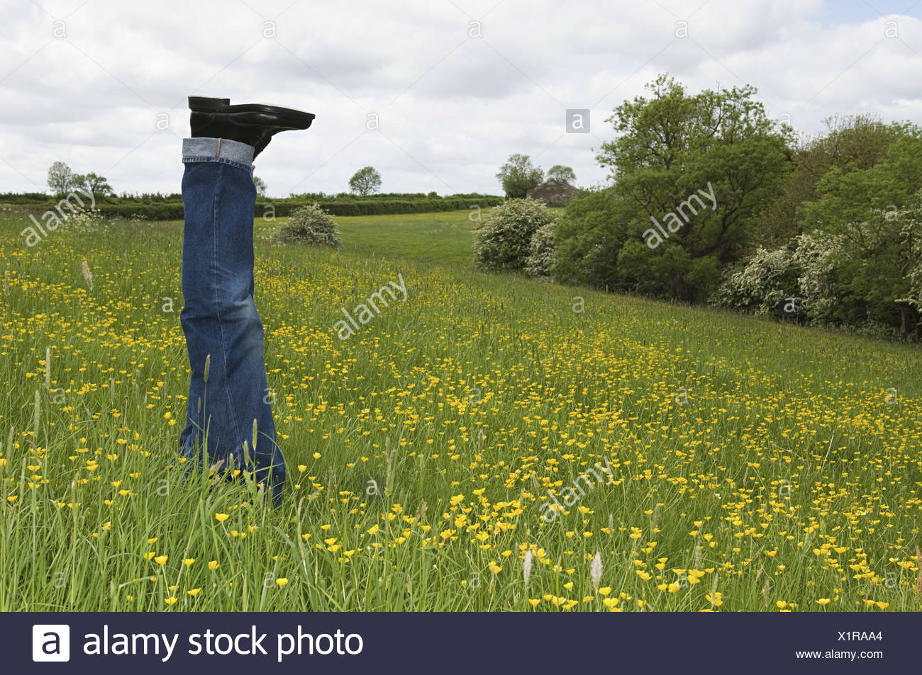 A person lying in a flower meadow with legs upright in the air  England - Stock Image
