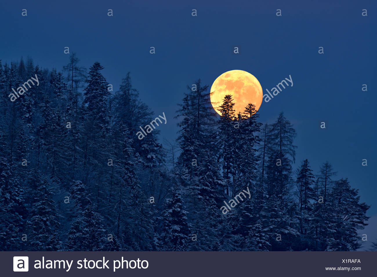 The full moon rising over a winter forest, Tyrol, Austria - Stock Image