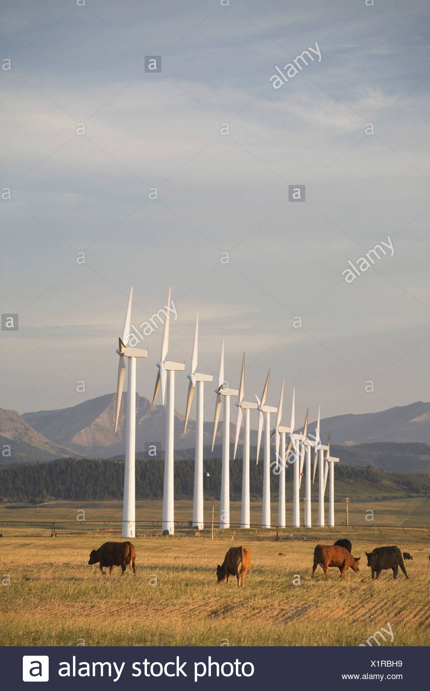 Pincher Creek, Alberta, Canada; Wind Turbines In A Row With Cattle In A Field And Mountains In The Background - Stock Image