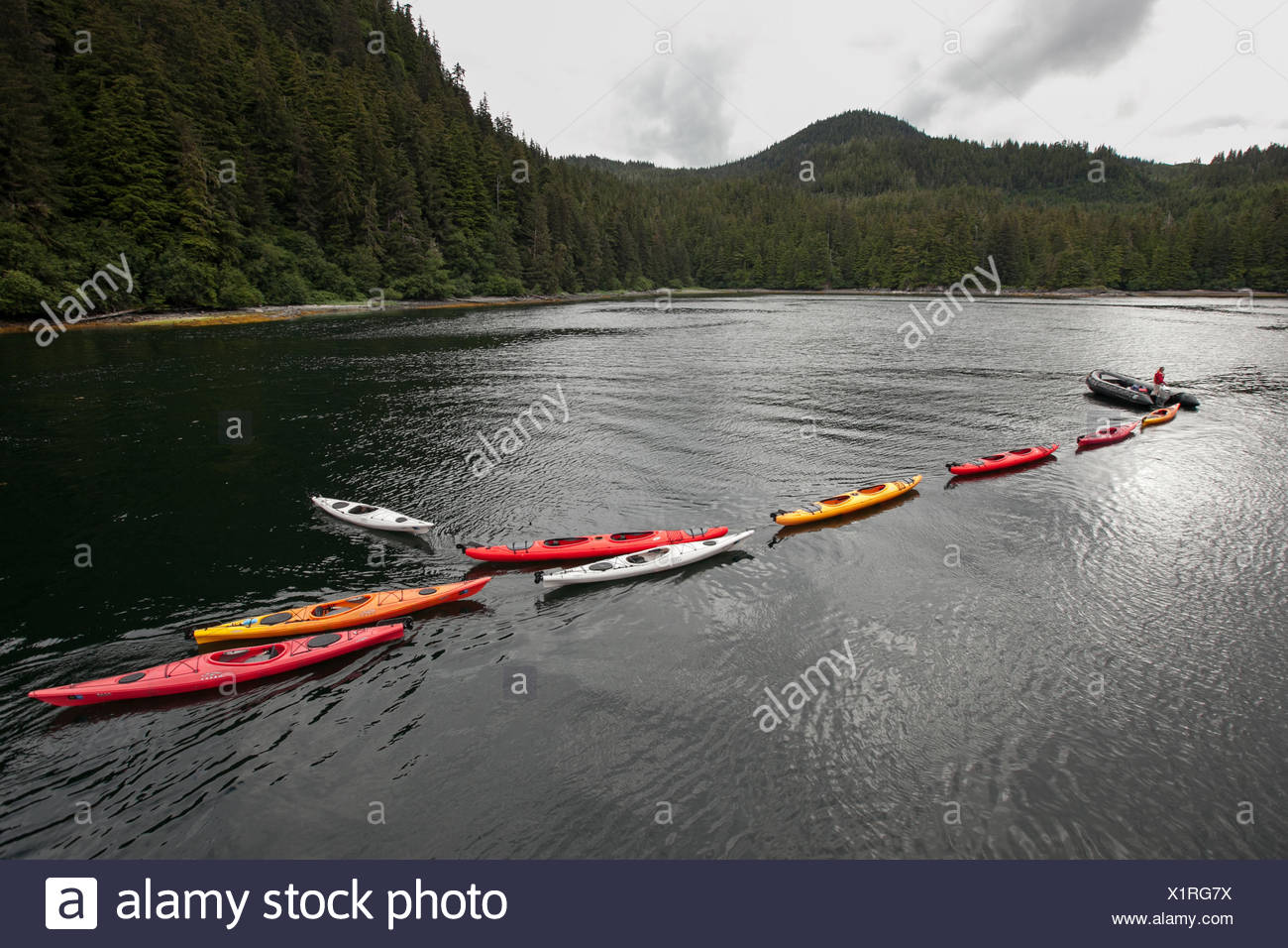 A passenger in a Zodiak boat pulls a long line of colorful kayaks through the water. - Stock Image