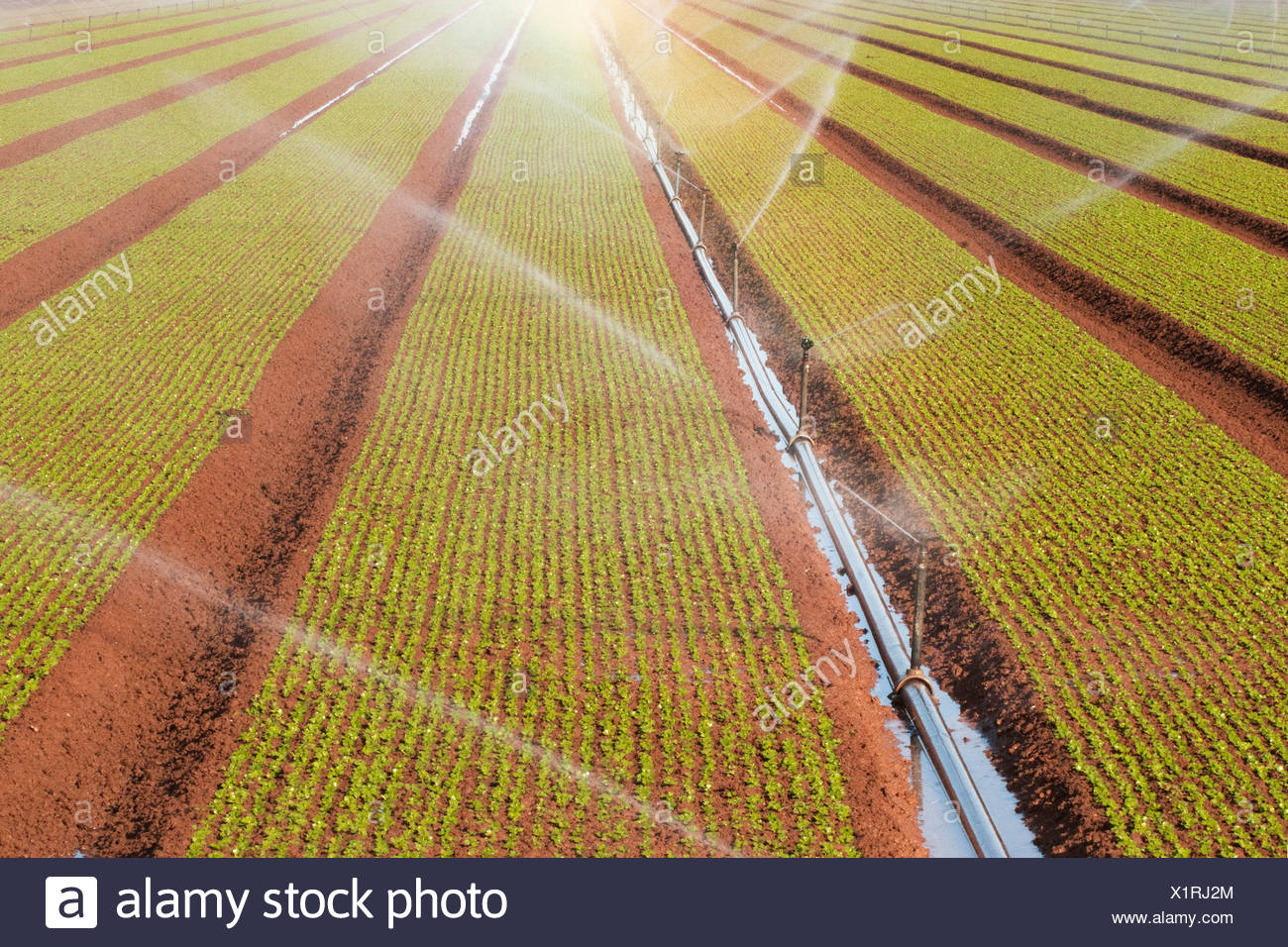 Sprinklers cause rainbows as they water rows of newly planted crops. - Stock Image