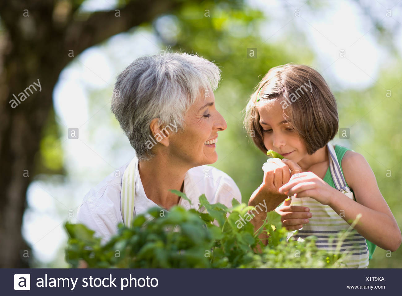 little girl examines something carefully - Stock Image