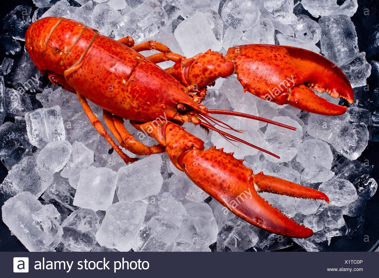 Lobster on ice - Stock Image