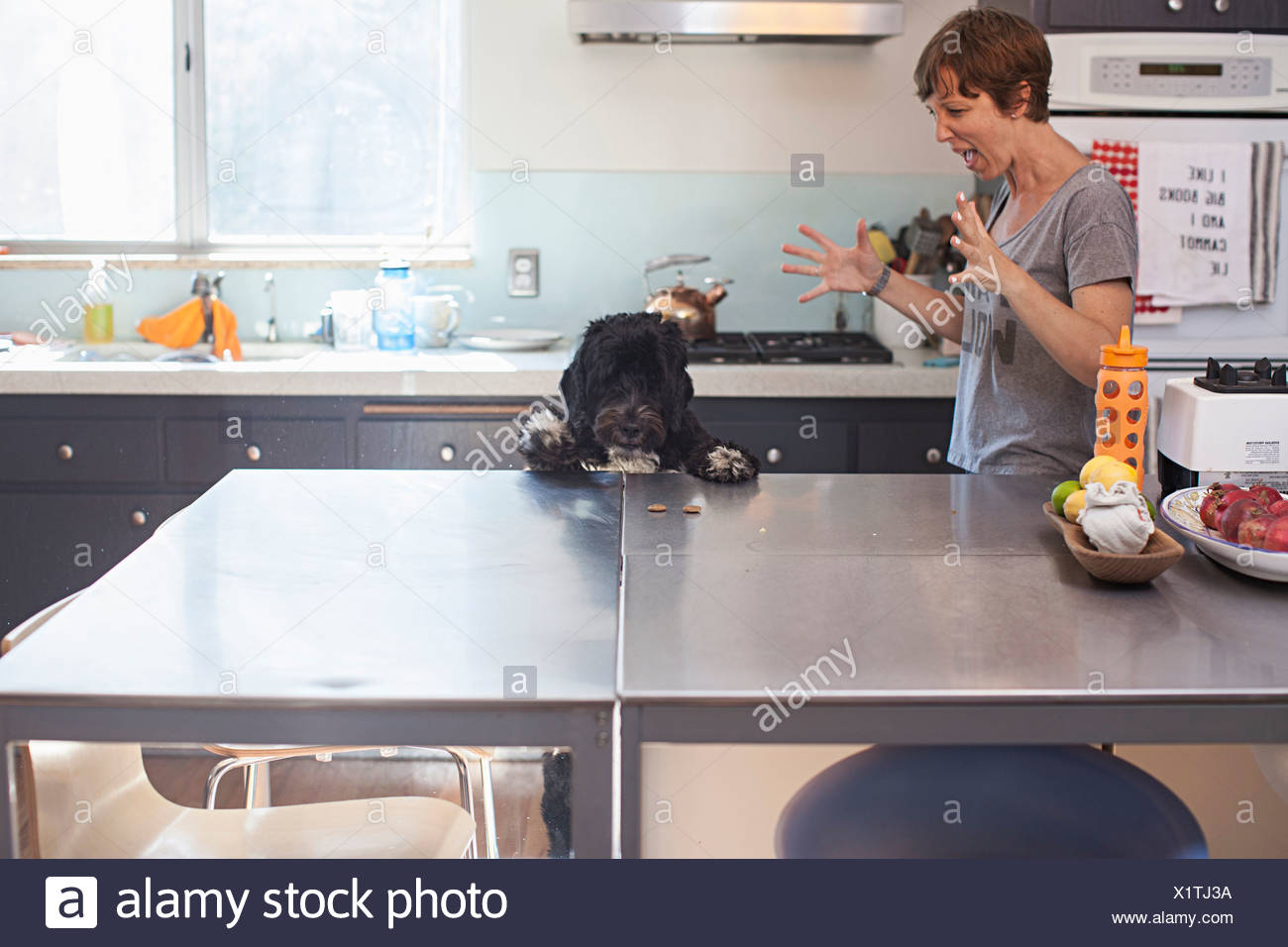 Naughty pet dog standing up at kitchen counter - Stock Image