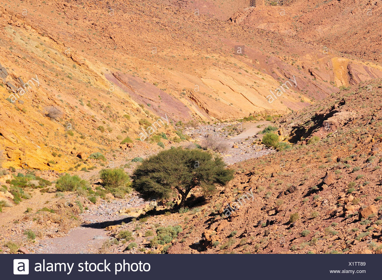 Typical landscape with a dry river bed, Oued, Anti-Atlas, Souss-Massa-Draâ region, Morocco Stock Photo