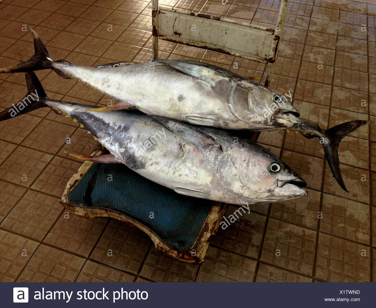 Yellowfin Tuna At Market Stock Photos & Yellowfin Tuna At Market