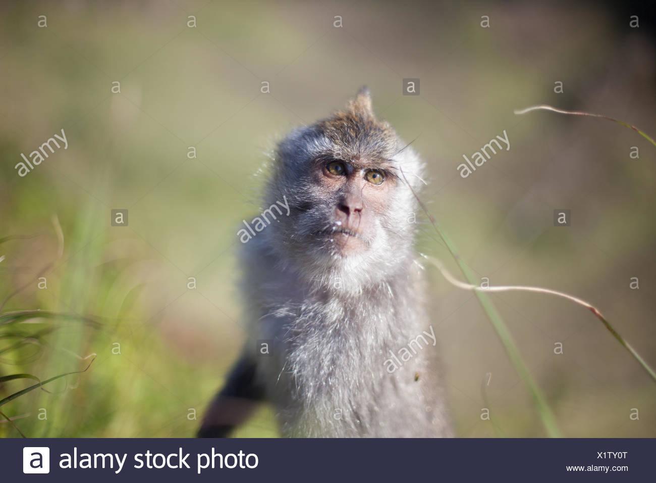 Portrait Of A Monkey - Stock Image