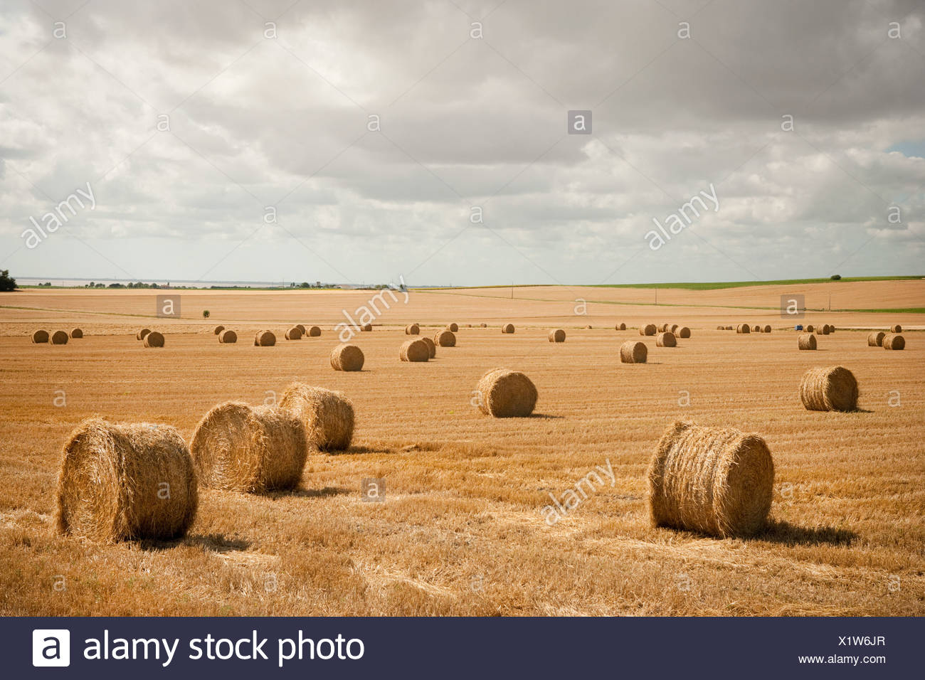 Round hay bales in field - Stock Image