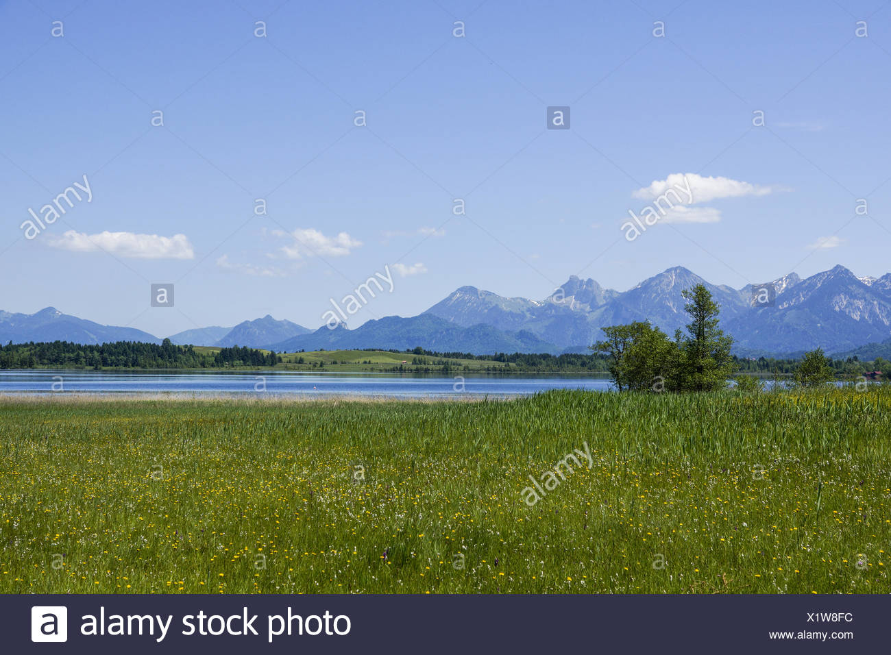Blick auf den Bannwaldsee im Ostallgäu, Königswinkel, Tannheimer Alpen, Overlooking the Bannwaldsee in Ostallgaeu, Koenigswinkel Stock Photo