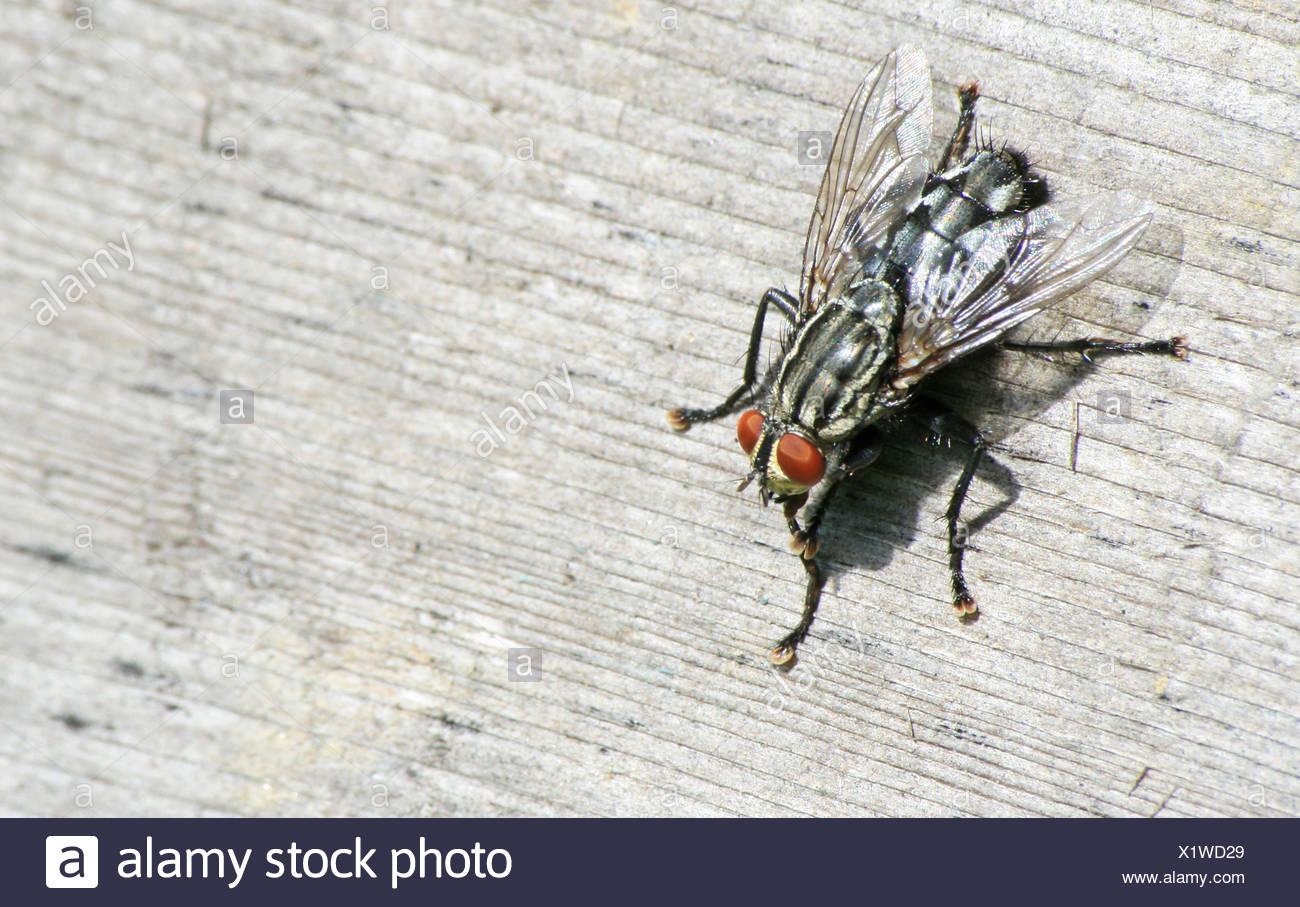 macro, close-up, macro admission, close up view, animal, insect, fly, macro, - Stock Image